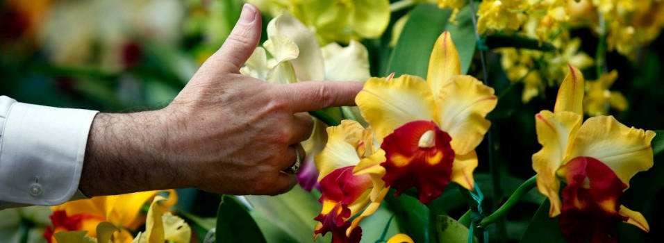 Claves para aprender a cultivar orquídeas