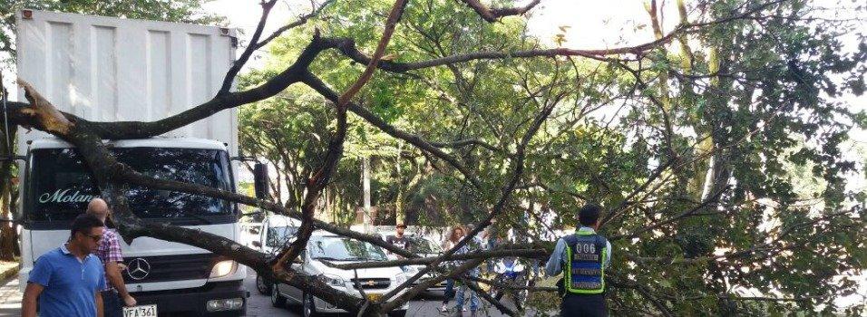 Un árbol cayó sobre la avenida El Poblado