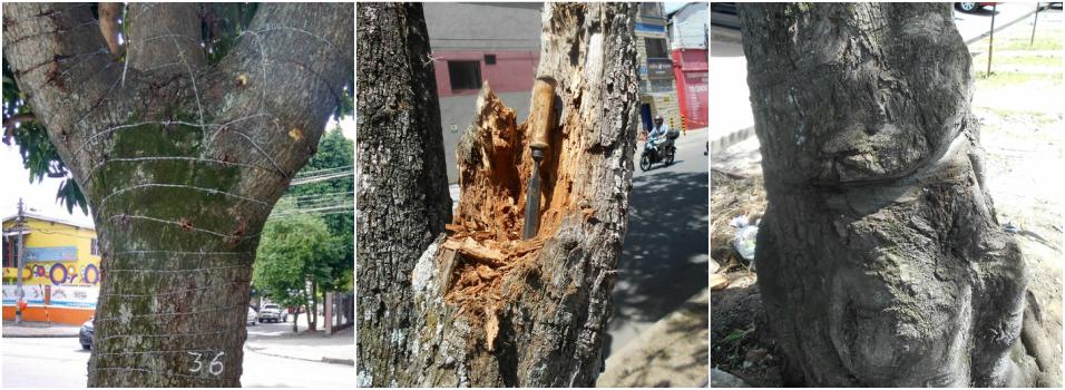 Así están los árboles del barrio Fátima