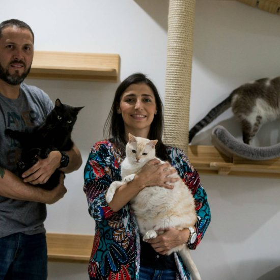 Mirringa mirronga: Un emprendimiento que nació por amor a los gatos