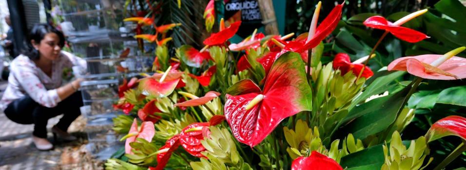 Comienza la exposición Orquídeas, Pájaros y Flores