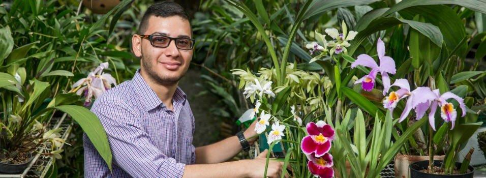 Así cultivan los apasionados por las orquídeas
