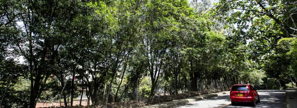 442 árboles se salvaron de ser talados en El Poblado