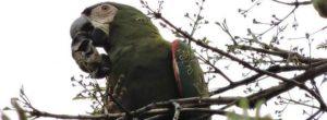 Estas son las aves que revolotean por La Castellana