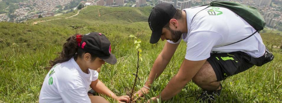 Lo que debe saber para sembrar un árbol en Medellín