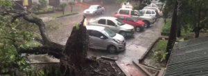 Por lo menos 2 árboles se cayeron en Laureles por el aguacero