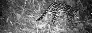 Fauna silvestre necesita más protección