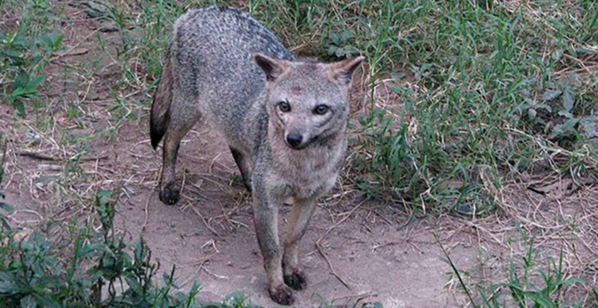 La fauna silvestre que habita en Belén