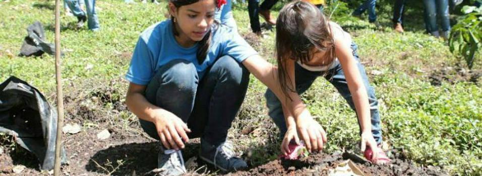 Se sembraron 200 árboles en el cerro Nutibara