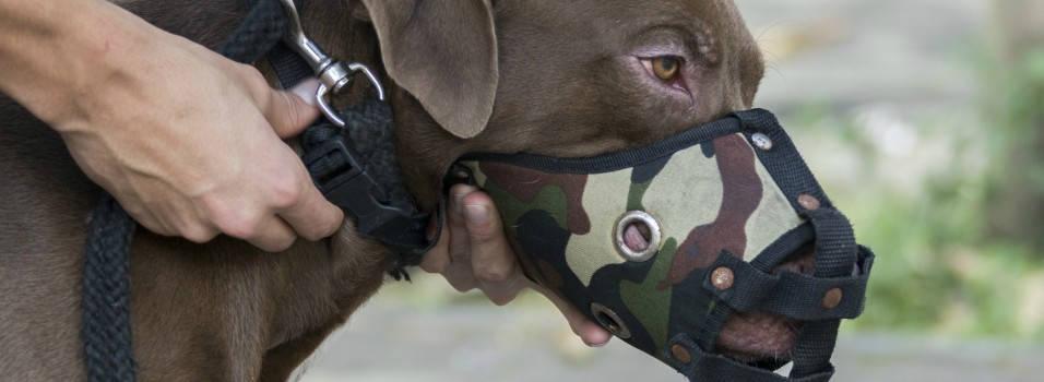 Todavía no hay quien asegure a los perros peligrosos