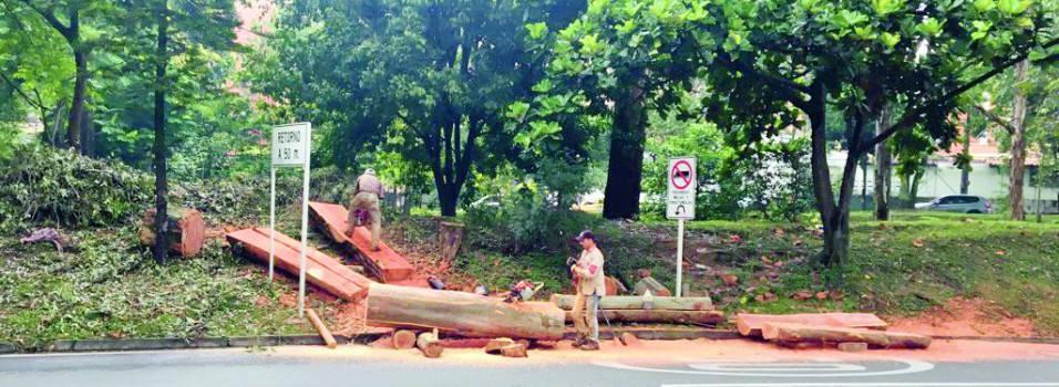 ¿Por qué están talando árboles en Envigado?