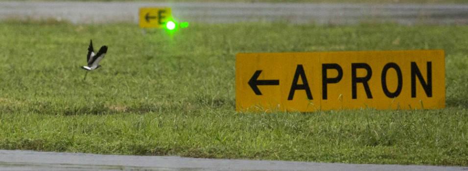 Así controlan las aves en el aeropuerto Olaya Herrera de Medellín