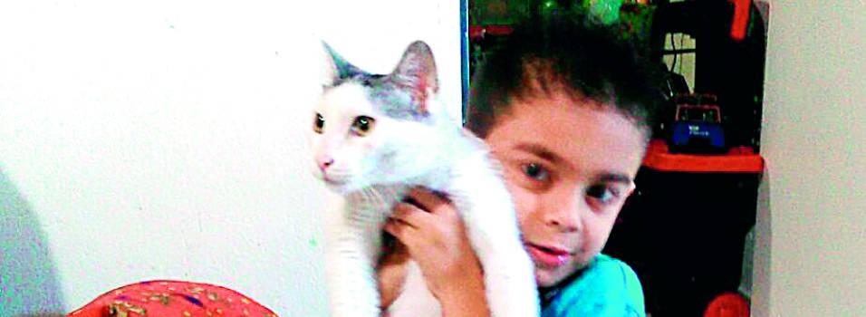 92 gatos han conseguido hogar gracias a Gente
