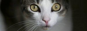 Lo que debe saber para educar a su gato