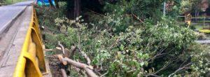 Árboles: entre la tala y la conservación en El Poblado