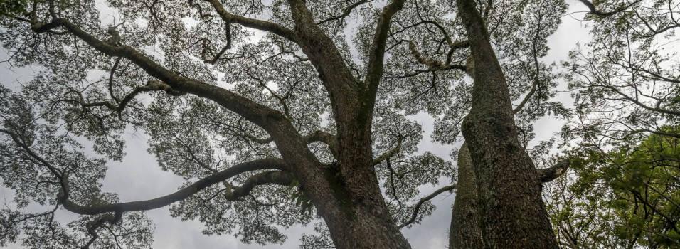 Las historias que cuentan los árboles de Belén