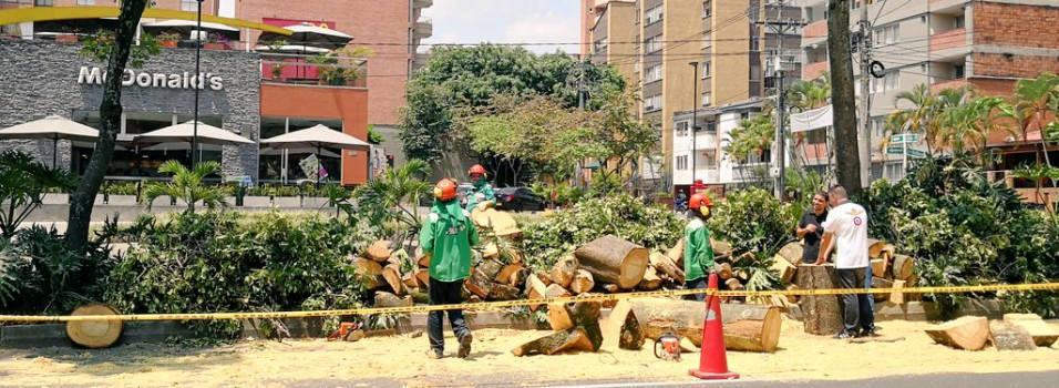 Los árboles que se murieron en Laureles