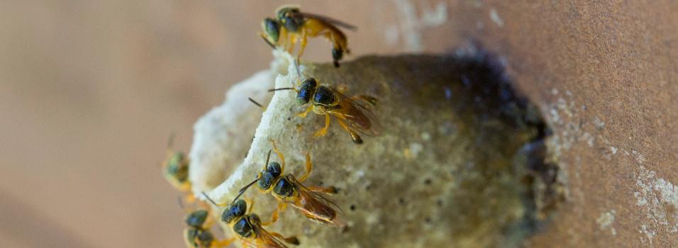 Conozca los cultivos de abejas en Envigado