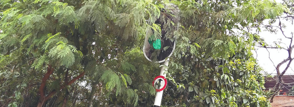 Ramas de árboles tapan un semáforo en Belén