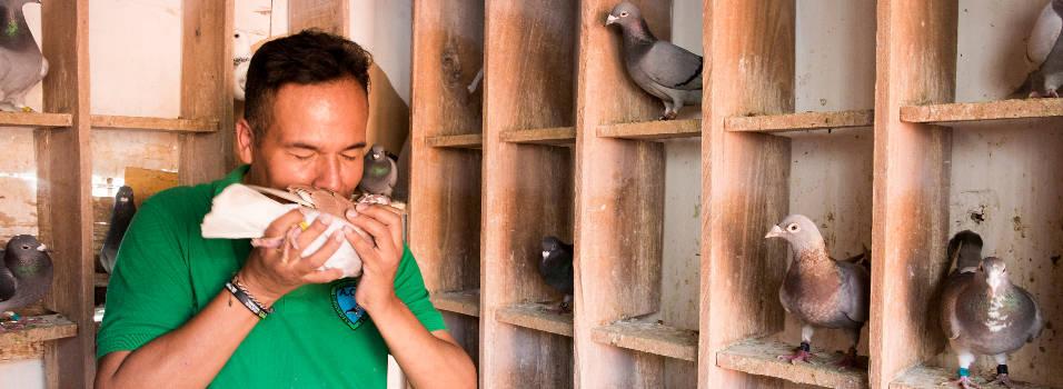 120 palomas viven en una terraza de Laureles
