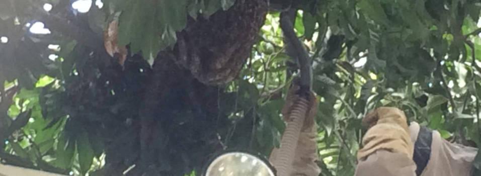 Bomberos controlaron panal de abejas en Malibú
