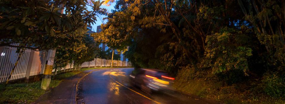 Denuncian atropellamiento de fauna en Los Bernal