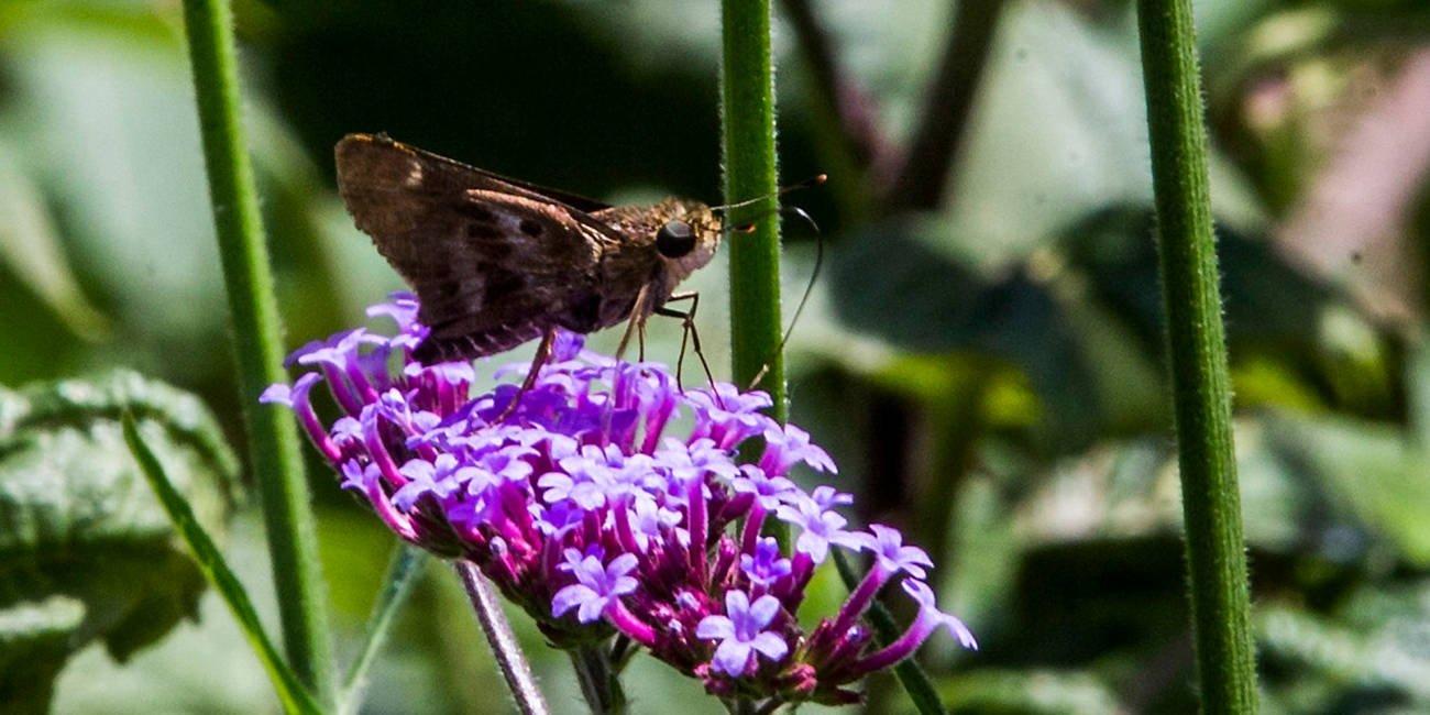 Las mariposas de Los Parra tienen un nuevo hogar