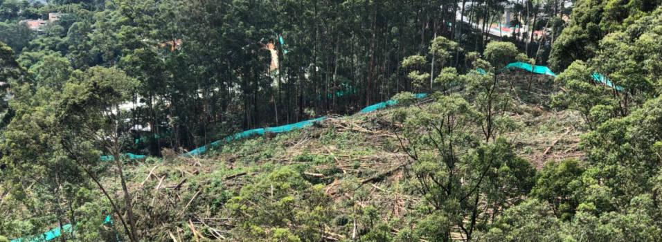 Preocupa tala de árboles en Las Palmas