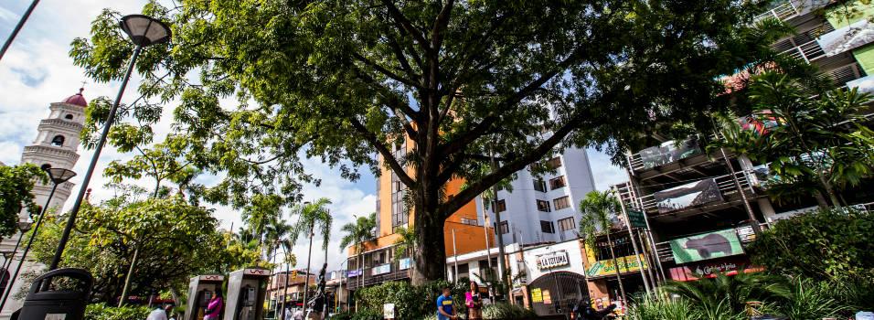 Las historias que cuentan los árboles de Envigado