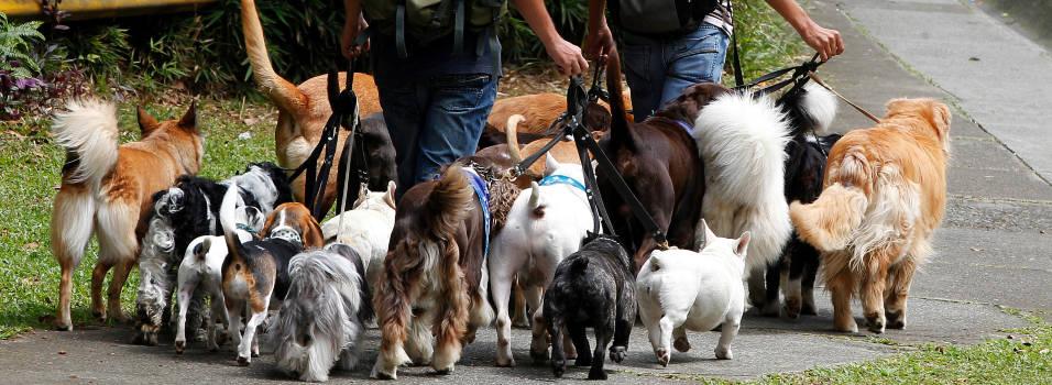 Lo que debe saber al contratar un paseador de perros