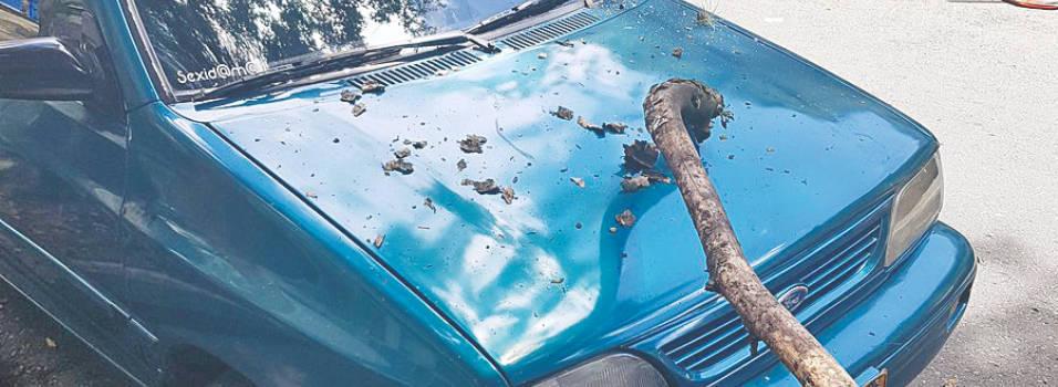 ¿Quién responde por la caída de una rama en un carro?