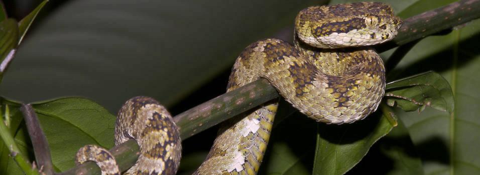 Las serpientes que viven en Envigado