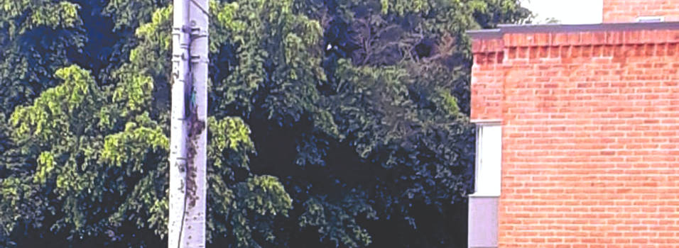 Panal de abejas causa problemas en San Joaquín