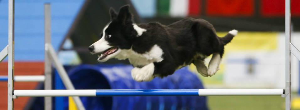 Belén tendrá un escenario para las actividades caninas