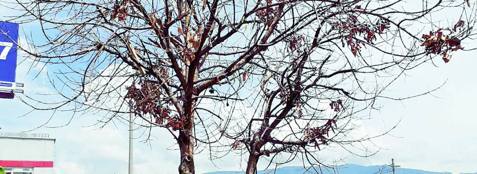 Este frondoso árbol de la 30 con la 70 se secó