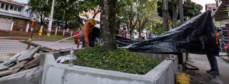¿Están en riesgo los árboles de la 30A por las obras en los andenes?
