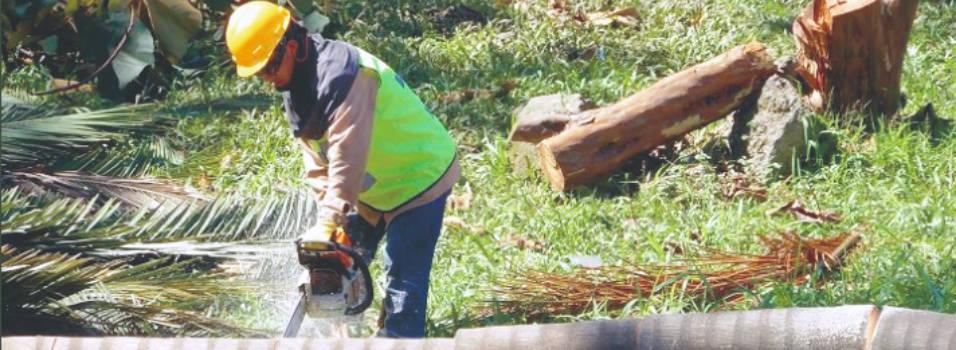 743 árboles serán talados para construir la Distribuidora en Envigado