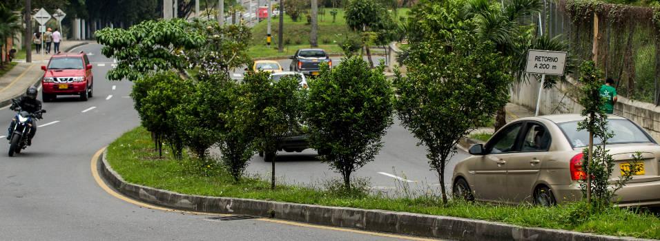 Así van los árboles que sembraron por valorización en El Poblado