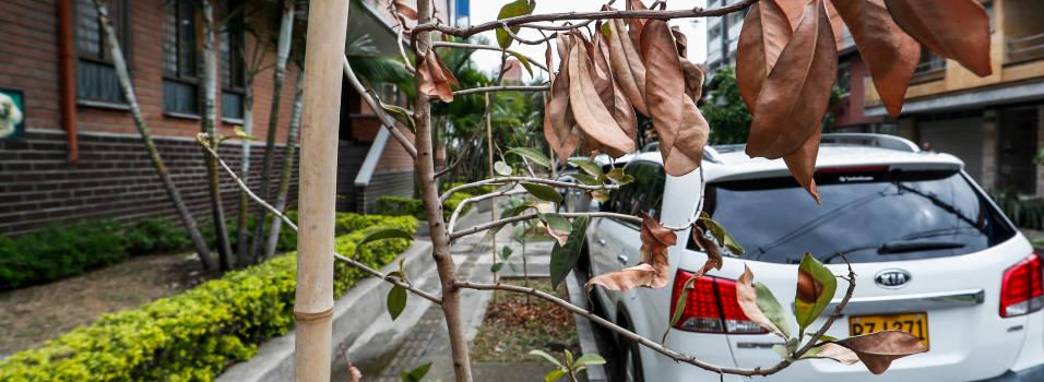 ¿Quién responde por estos árboles secos en la avenida Bolivariana?