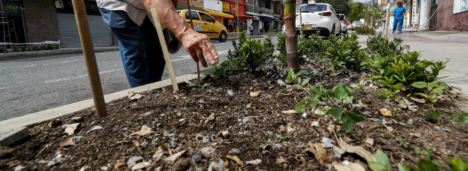 Se están robando las plantas de las nuevas jardineras de la 30A