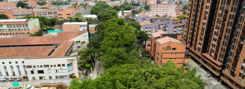 133 árboles dirían adiós en el túnel verde de Envigado