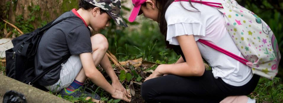Vecinos plantaron 500 árboles en Envigado