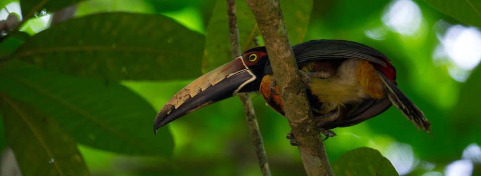Grupo de Observadores de Aves de Eafit avistó 202 especies