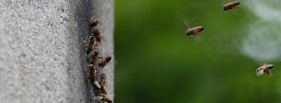 Panal de abejas en un poste afecta a vecinos de Los Alpes