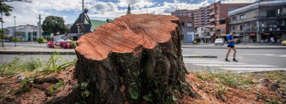Por qué talaron este árbol cerca a la iglesia de San Marcos