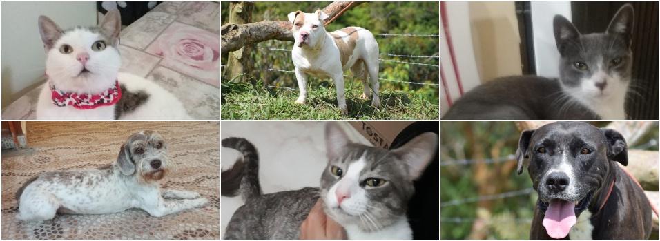 Estas mascotas buscan un hogar