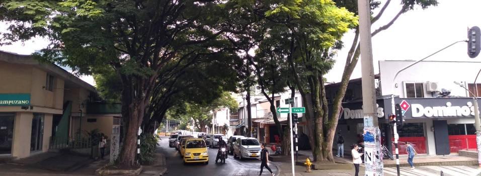 133 árboles que crecieron con Provenza serían talados