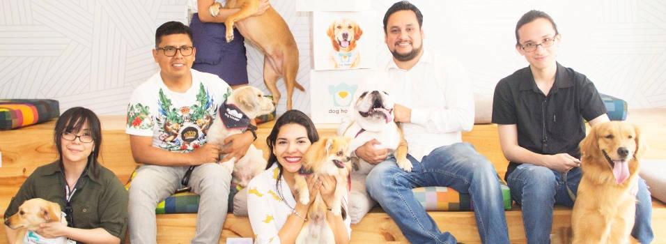 En Medellín ofrecen un Airbnb para mascotas