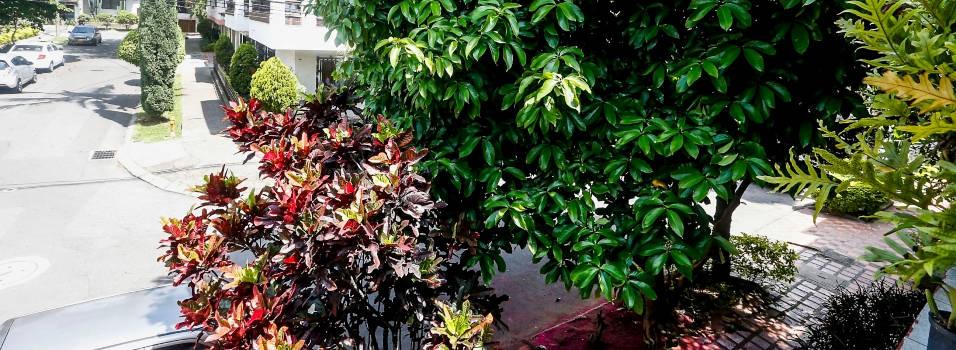 Piden ayuda por miedo al desplome de 2 árboles en Rosales