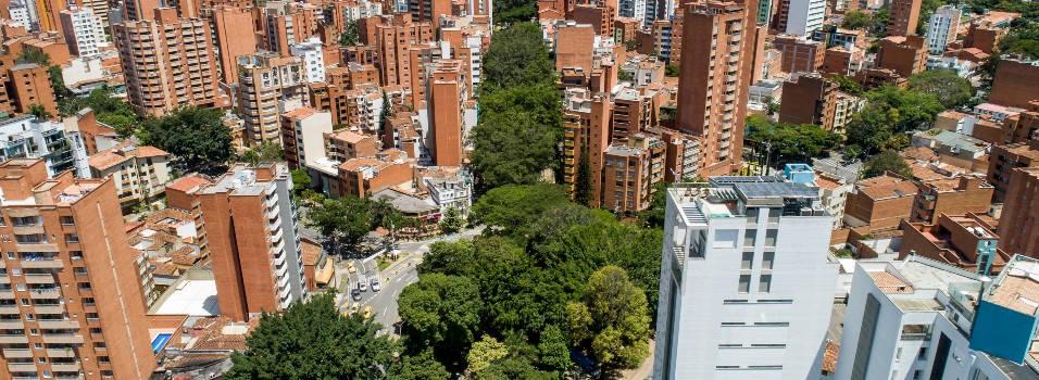 Los árboles emblemáticos de las avenidas Jardín y Nutibara